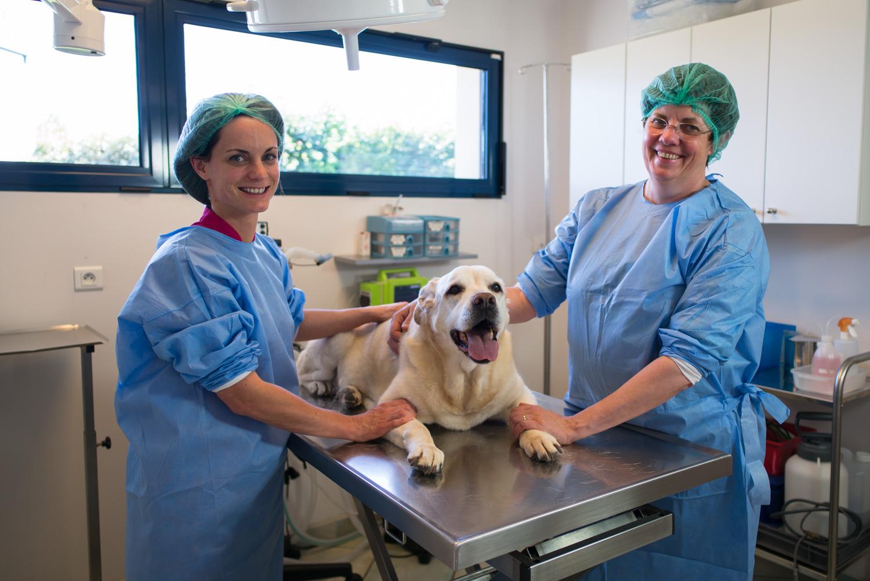 Bloc opératoire de la clinique vétérinaire