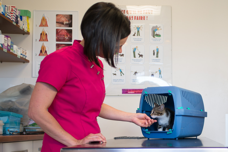 Salle de consultation de la clinique vétérinaire